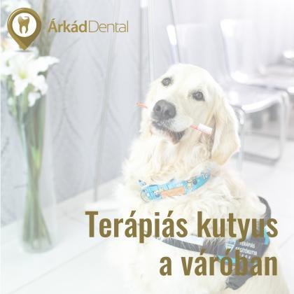 Terápiás kutyus a váróban